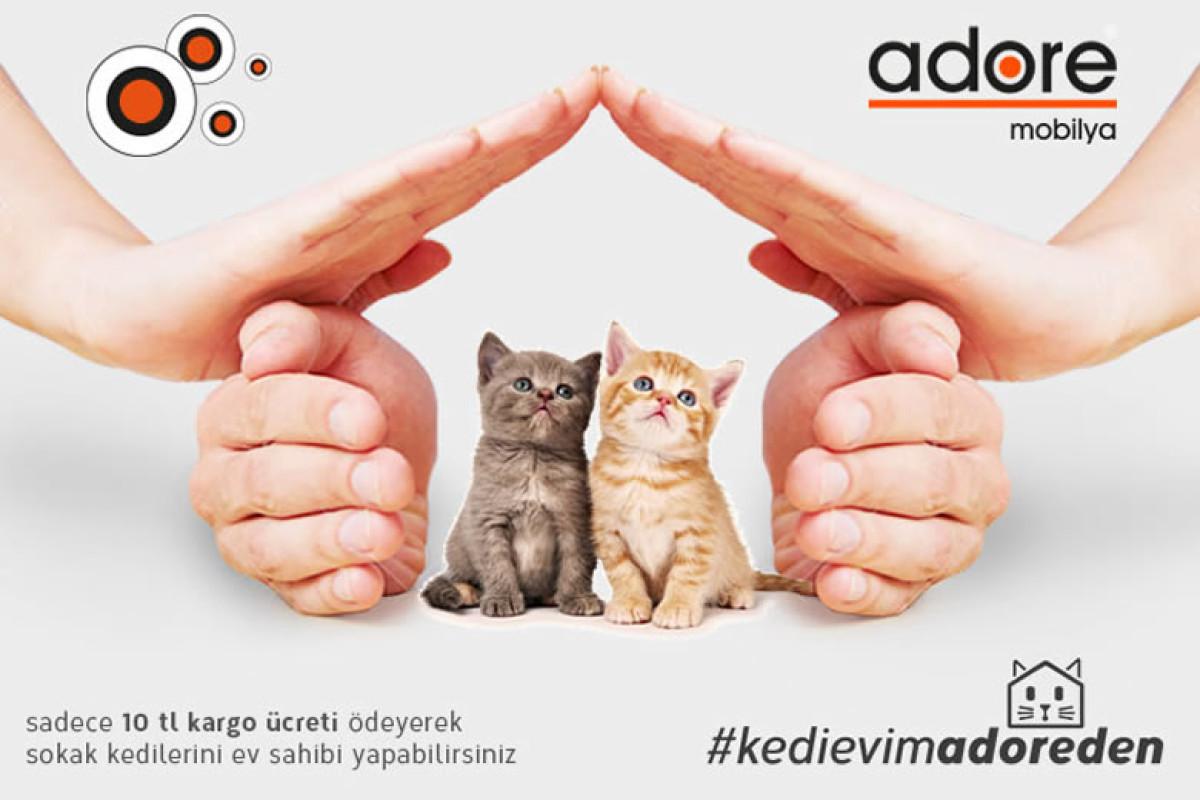 Geleneksel Adore Kedi Evi Projesi Yeniden Başlıyor